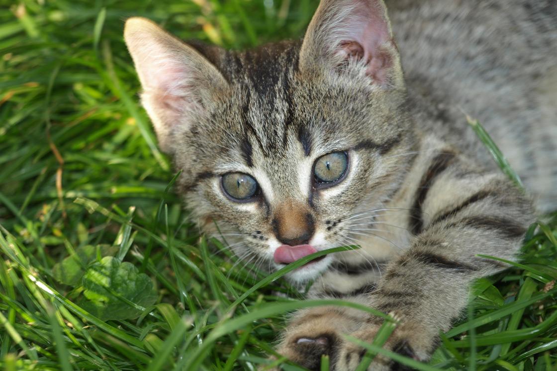 Getigertes Kätzchen auf dem Wilmershof
