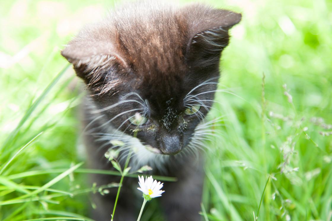 Schwarzes Kätzchen auf dem Wilmershof