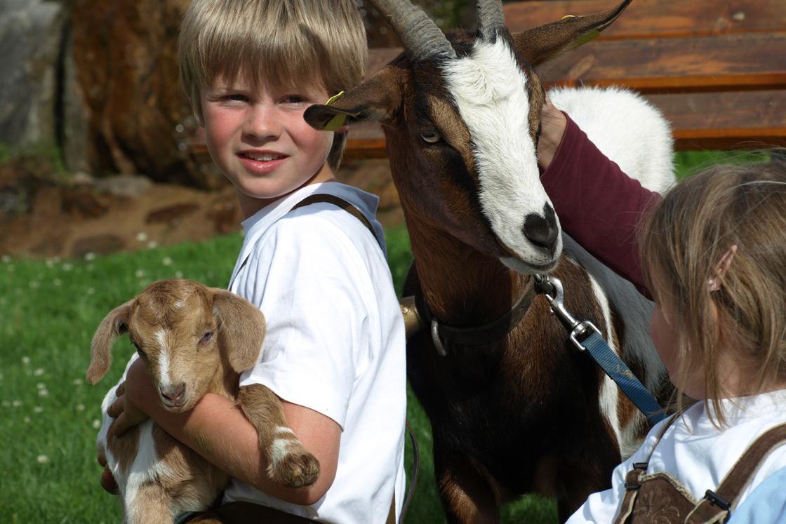 Zicklein und Ziege auf dem Wilmershof